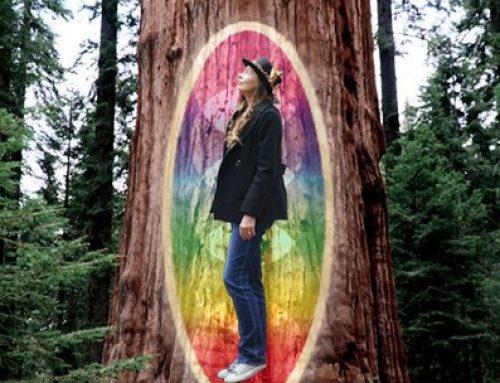 Grace Gravity's new record Dream Analog